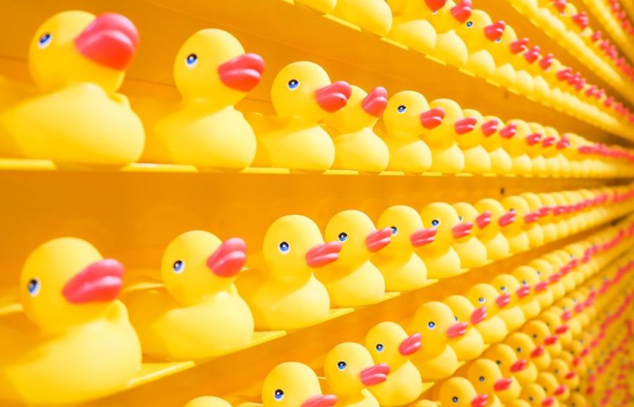 Build your brand with Rhetoric PR (rubber duckies lined up on shelf)