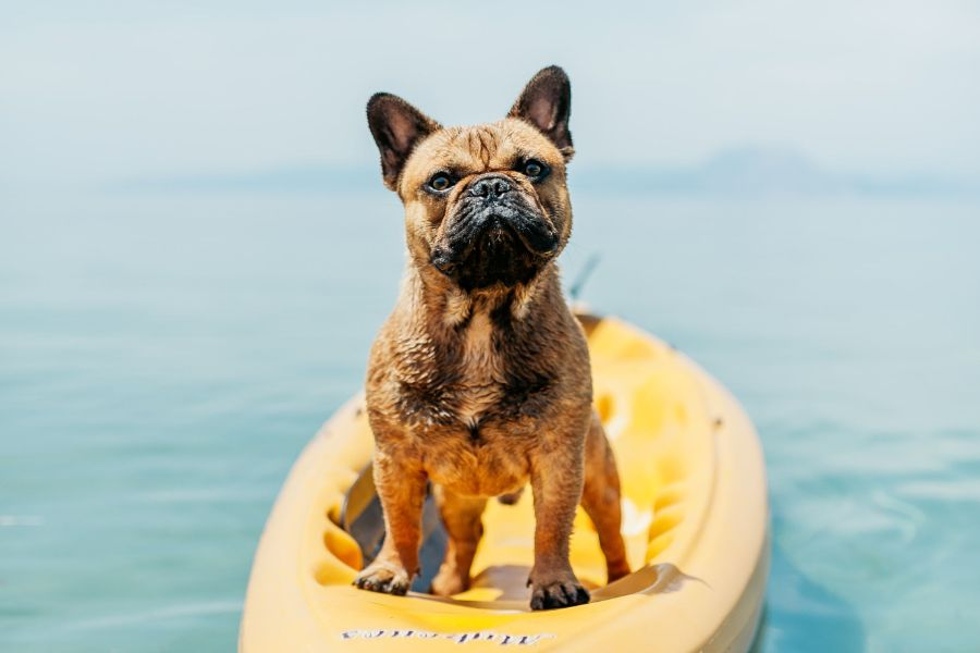entrepreneur - thinking differently, like this dog in kayak
